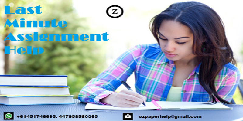 Last minute essay writing service